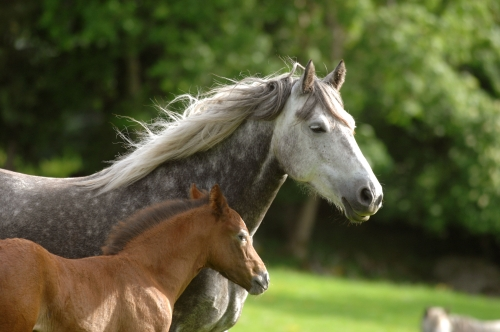 Don't forget to register your 2013 foal