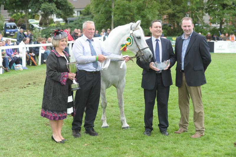 Reg Mare 8 9 Yrs Welcome To Connemara Pony Breeders Society