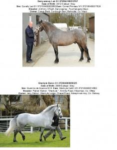Class One Mullingar, Derryveeney & Glenkyle