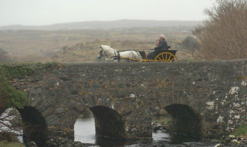 Nominations for election to Connemara Pony Breeders Society Council