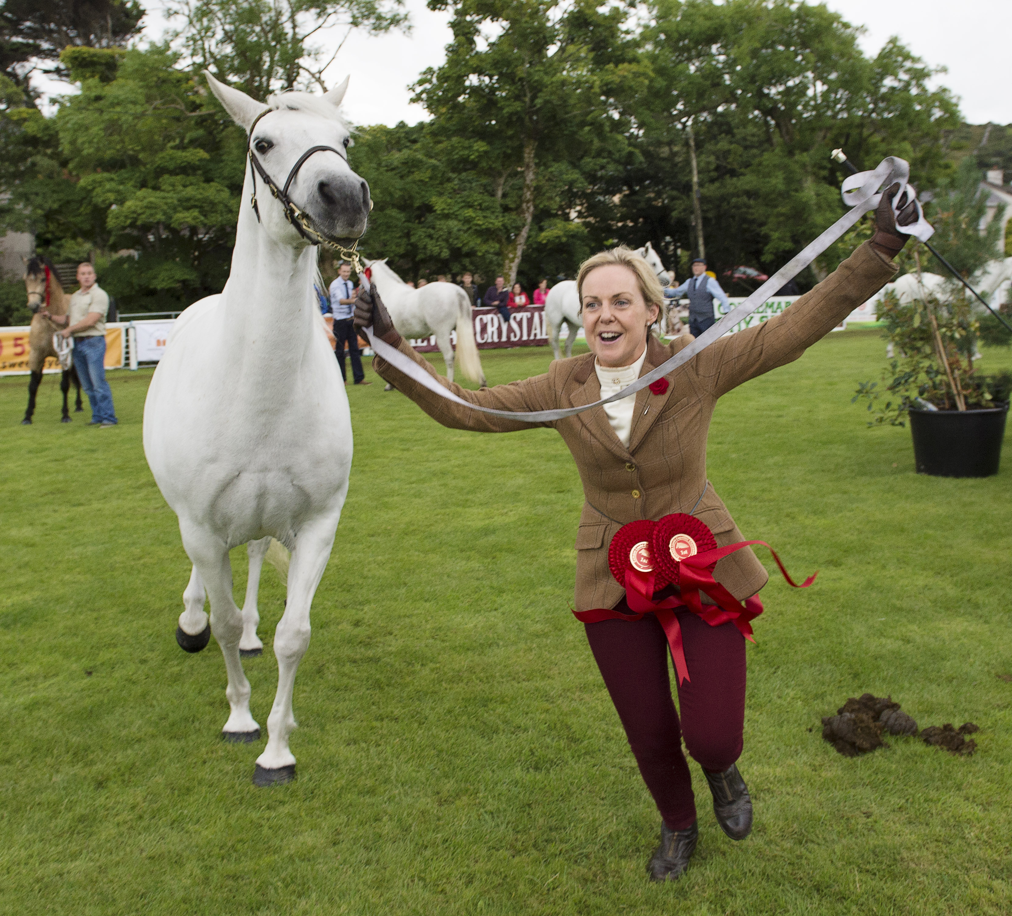 Connemara Pony Festival Report 2016