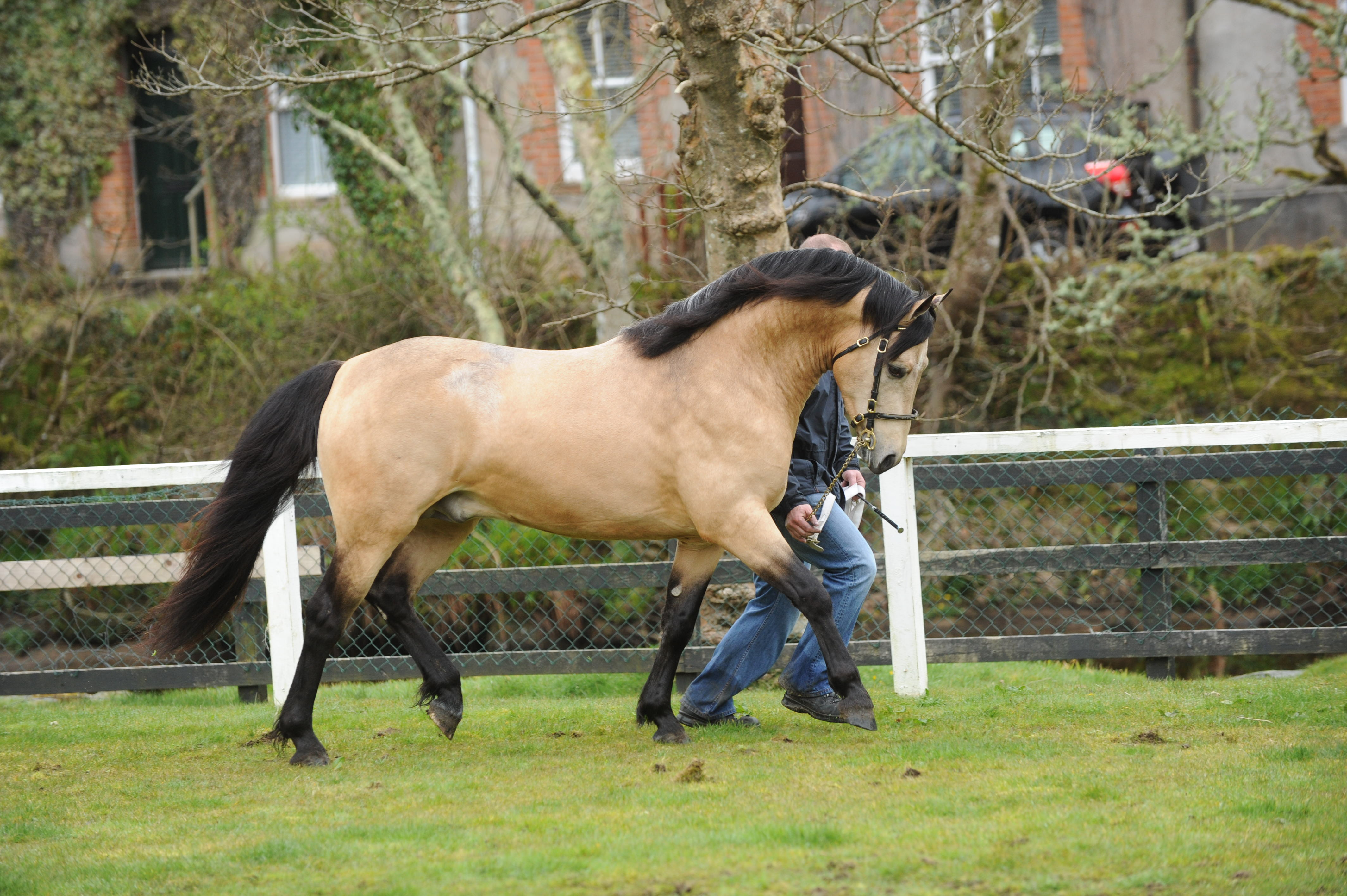 National Pony Stallion Parade to be held in Duffy's Equestrian Centre Claregalway