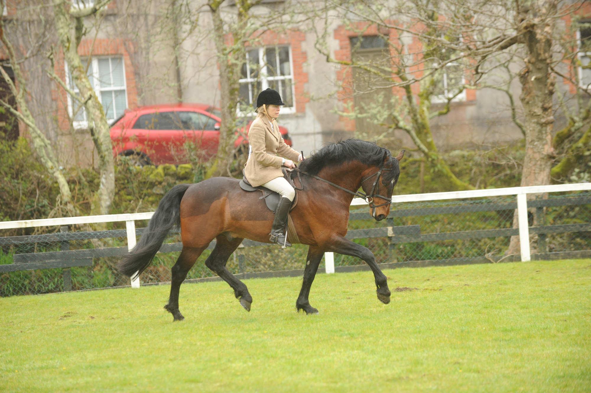 wel e to the connemara pony breeders society clifden