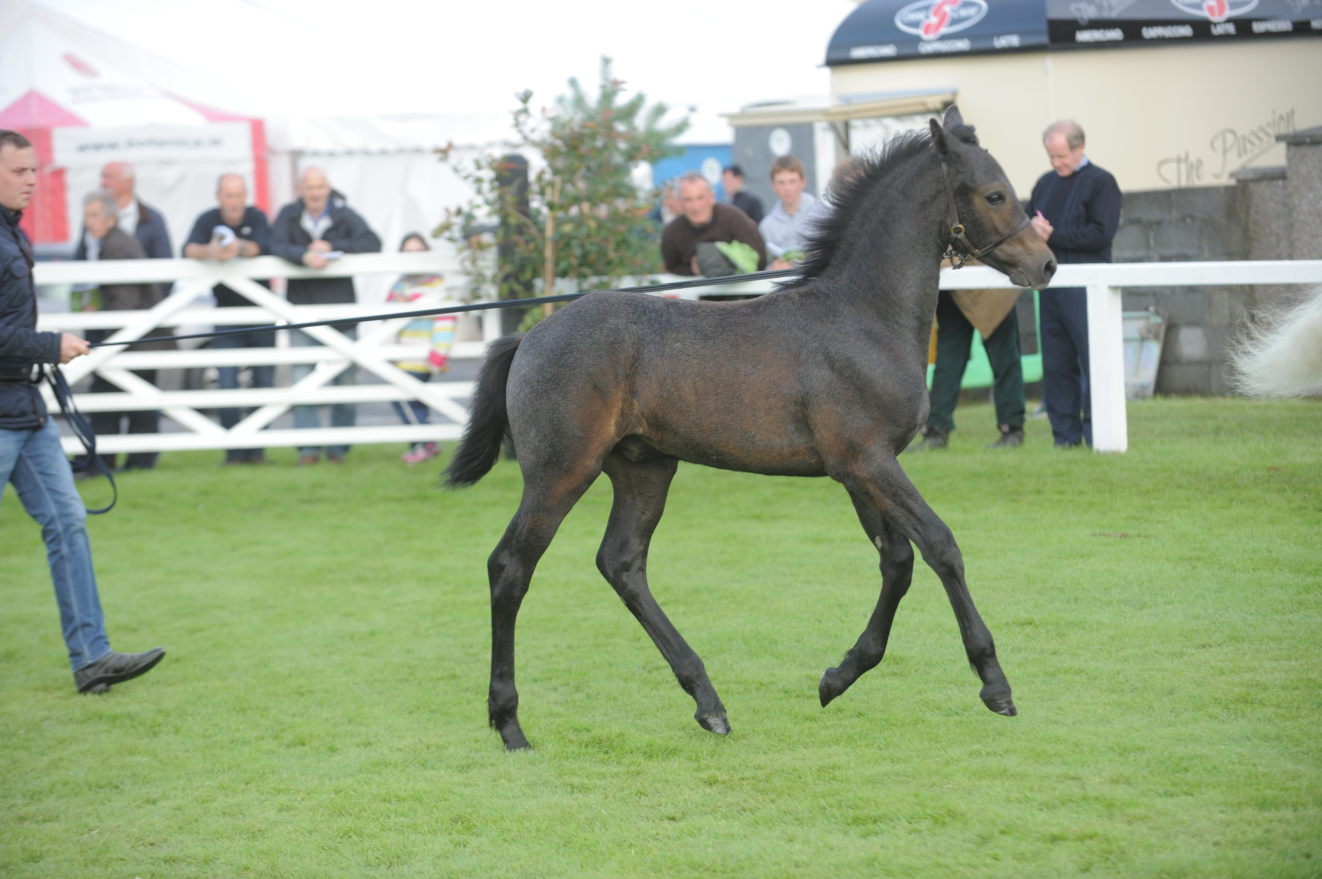 Equine Identification Regulations - Breeders please read