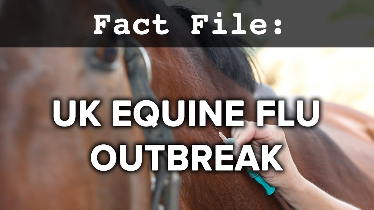 Equine Influenza Update